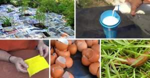 Pesticidas-caseros-ecológicos-para-plantas